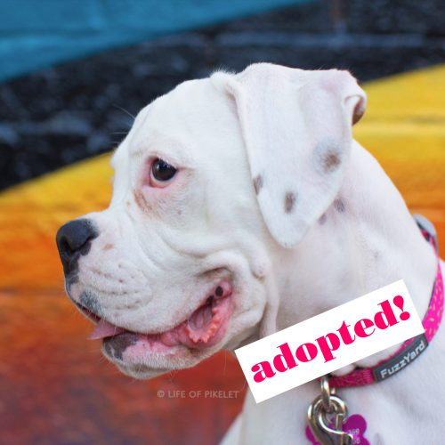 Devil.13-adopt