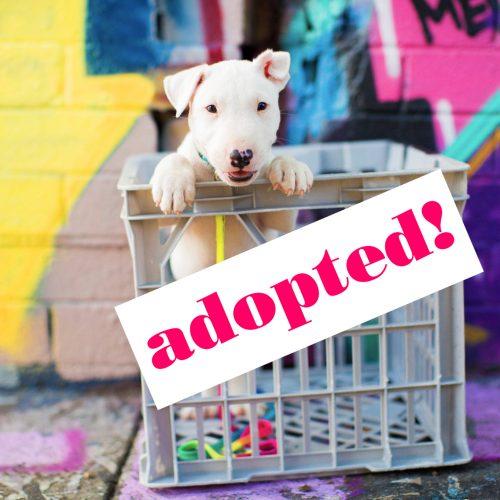PP.5-adopt