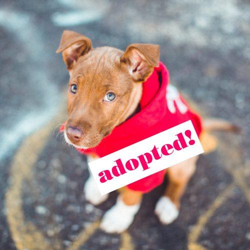 Potlock-Adopted