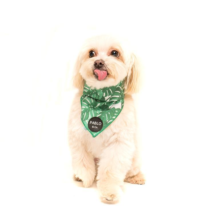 PABLO & Co. The Leaf Bandana