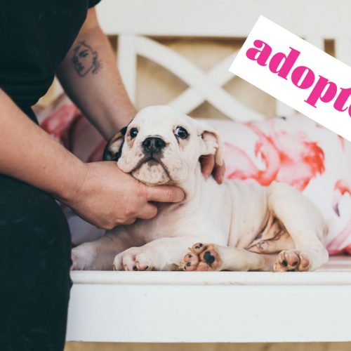PAY.ADOPTED